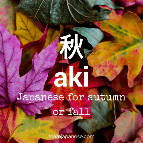 aki - the Japanese word for autumn or fall. Seasons are very important in Japan. Japanese people honour the changing seasons with special food, drink, festivals and customs. And of course, there are special seasonal words too! Increase your Japanese vocabulary with this list of Japanese autumnal words and phrases. Click through to the blog post on Team Japanese to learn more!