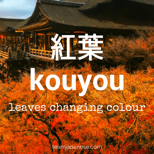 kouyou - the Japanese word for changing color autumn leaves. Seasons are very important in Japan. Japanese people honour the changing seasons with special food, drink, festivals and customs. And of course, there are special seasonal words too! Increase your Japanese vocabulary with this list of Japanese autumnal words and phrases. Click through to the blog post on Team Japanese to learn more autumn Japanese words!