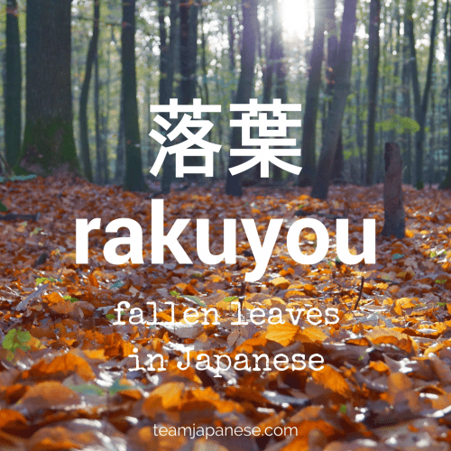rakuyou - the Japanese word for fallen leaves. Seasons are very important in Japan. Japanese people honour the changing seasons with special food, drink, festivals and customs. And of course, there are special seasonal words too! Increase your Japanese vocabulary with this list of Japanese words and phrases for autumn and fall. Click through to the blog post on Team Japanese to learn more autumn Japanese words now!