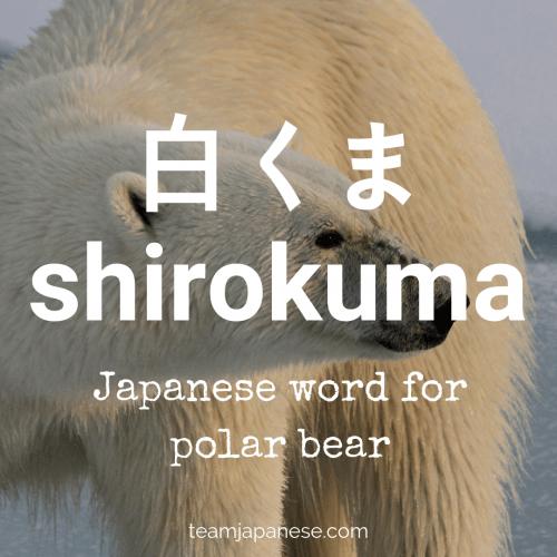 shirokuma - polar bear in Japanese - Japanese winter words