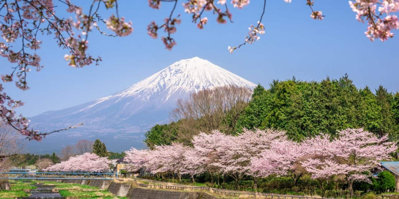 16+ Essential Japanese Words for Spring