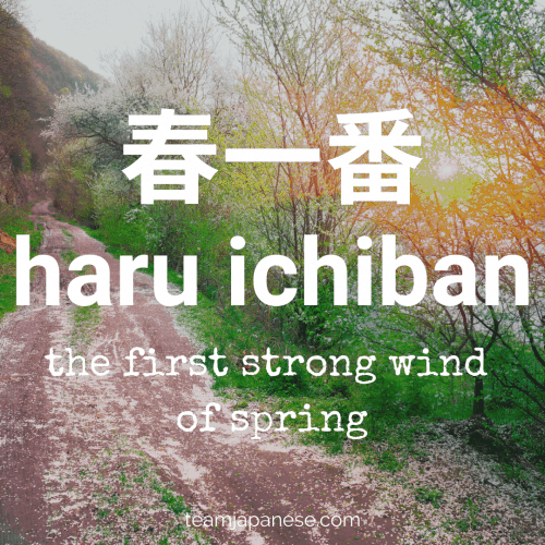 haru ichiban - the first strong, warm wind of the year. For more Japanese seasonal words for Spring, click through to teamjapanese.com!