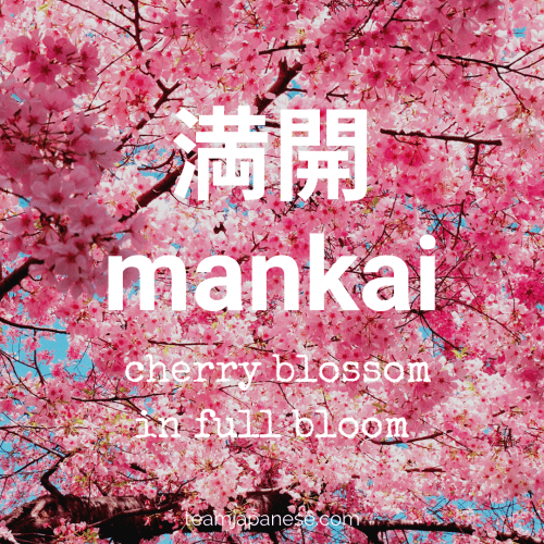 mankai - a word to describe sakura in full bloom. For more Japanese seasonal words for Spring, click through to teamjapanese.com!