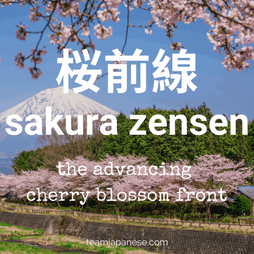 sakura zensen - the approaching cherry blossom front as it moves from south to north of Japan. For more Japanese seasonal words for Spring, click through to teamjapanese.com!