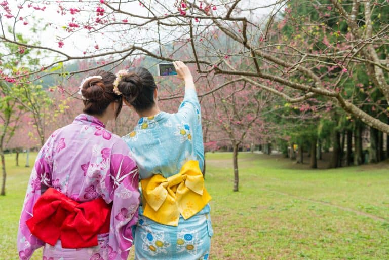 Japanese friends: two young women wearing colourful kimono, standing under the cherry tree and seeing the cherry blossom. They are taking a selfie together.